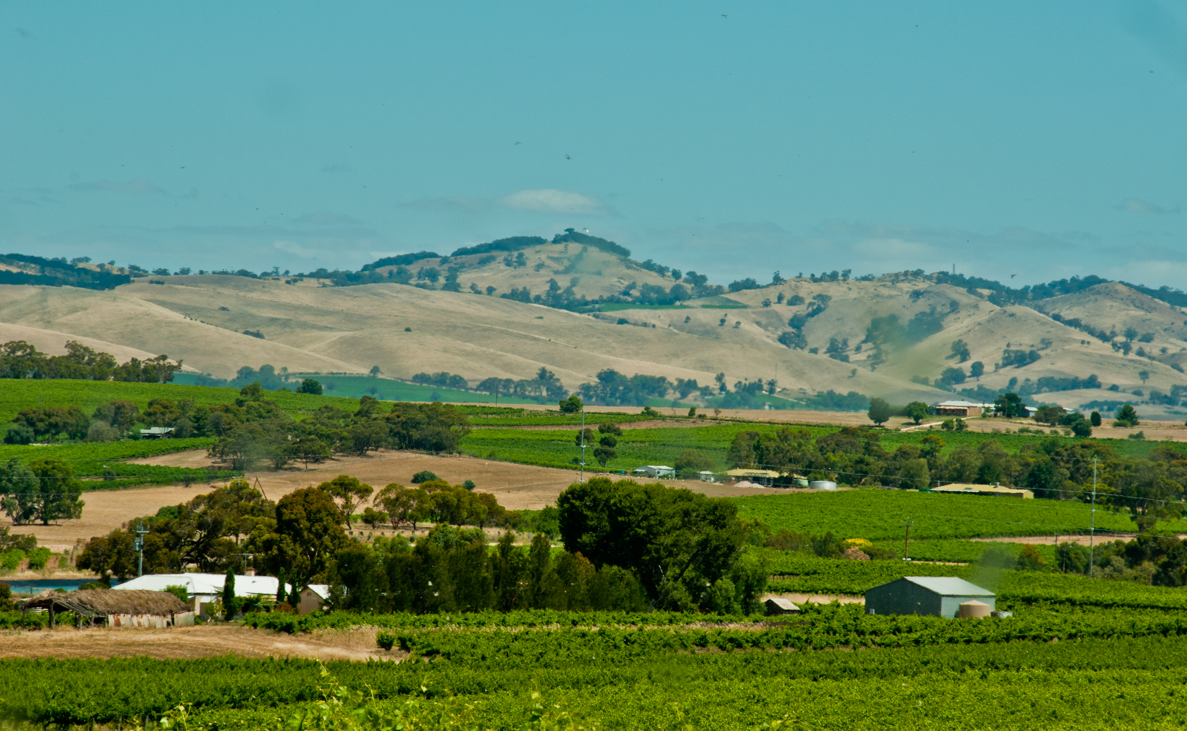 In the Barossa Valley