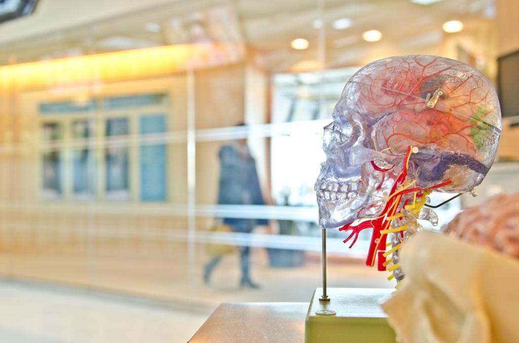 Museum anatomy exhibition