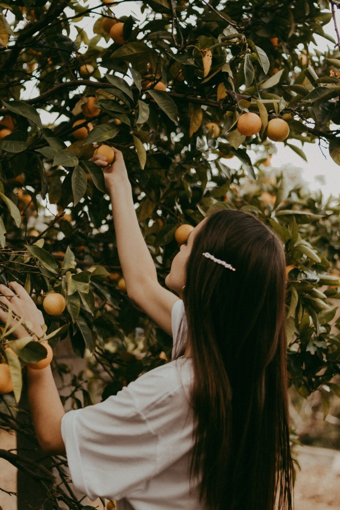 Girl picking oranges from a tree
