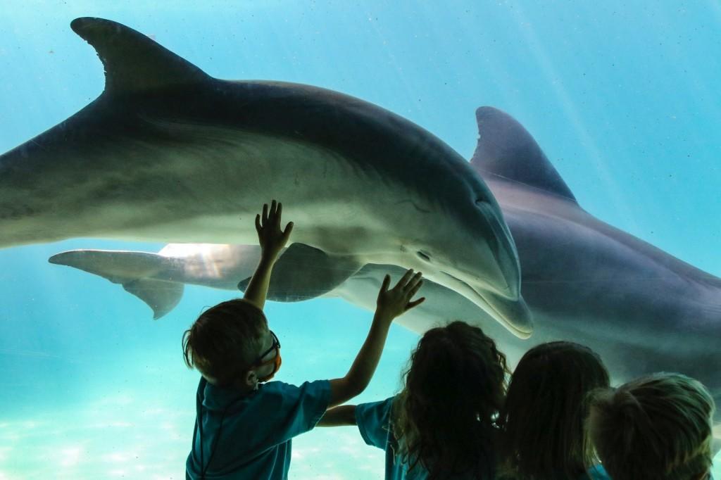Kids in the aquarium at SeaWorld